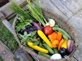 Grand panier de légumes d'été sur une charette en bois