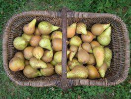 Panier de poires